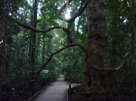 Mary Cairncross Reserve, Maleny.
