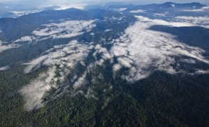 An aerial view of the Leuser Ecosystem, 19th November 2013. Photo: Paul Hilton