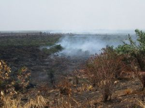 Forest and peqt fires in Riau. Photo by Julius Lawalata WRI.