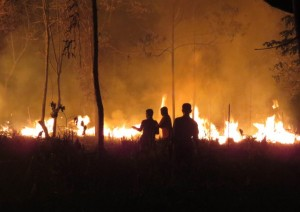 photo taken on September 25, 2015 and released on October 9, 2015 by the Borneo Orangutan Survival Foundation shows fires continuing to rage late at night at the Samboja Lestari Orangutan Reintroduction Program site in S