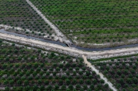 Young oil palm plantation in the PT Bumi Sawit Sejahtera (IOI) oil palm concession in Ketapang, West Kalimantan.